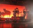 Canine en concert à Anthea